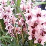 pin orchid1 150x150 Stimulating Statement: 3/29/2011
